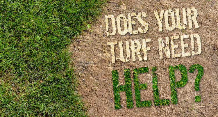 Does your turf need help?